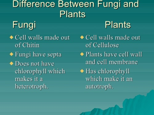 Fungi Manipulation-Fungi vs Plants